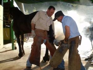 Horse riding in Gandia